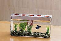 customizable tealight candle centerpiece with beta fish, so creative!