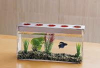 customizable tealight candle centerpiece with beta fish, so creative!