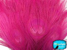 Wholesale Peacock 50 Pieces HOT PINK by MoonlightFeatherInc