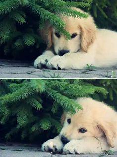 Puppy animals pet