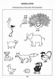 Picasa Webalbumok Arabic Alphabet Letters, Nature Study, Kindergarten Worksheets, Farm Animals, Children, Kids, Album, Teaching, Activities