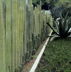 Great idea for a fence!
