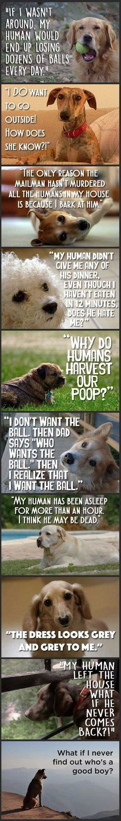 Just Dog Thoughts. [Not true that dogs see only grey! They are like color-blind humans, they see SOME colors, but not others.]