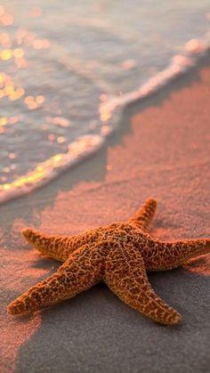 I Love The Beach, Jolie Photo, Ocean Beach, Summer Beach, Beach Glow, Soft Summer, Summer Breeze, Ocean Life, Sea Life Art