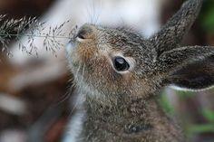 Rabbit #cute #animal