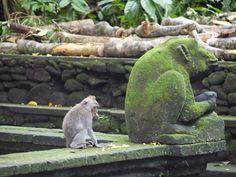 Miniature Plants, Green Plants, Garden Sculpture, Outdoor Decor, Animals, Travel, Animais, Animales, Animaux