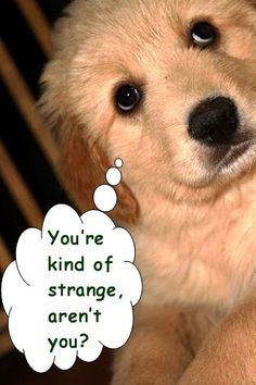 You're kind of strange, aren't you? FluffyButts funny dog meme