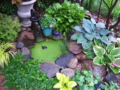 Container Gardening Pictures   sink a container into the earth to create a container pond surround ...