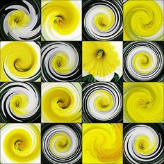 Daffodil Spring by Sarah Loft  #daffodils #spring #digitalart