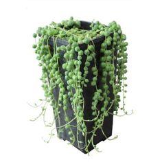Fabriquer un tableau de plantes grasses et succulentes blog jardin plantes grasses et tableau de - Cadre vegetal jardiland ...