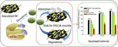 Enhanced biodegradation of PAHs in historically contaminated soil by M. gilvum inoculated biochar — ScienceDirect