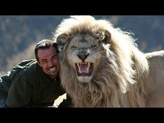 """Kevin Richardson, a. the Lion Whisperer, roars with one of his lions at the Kingdom of the White Lion Park in South Africa. """"This idiot is about to be my noon time snack"""" says the lion. Kevin Richardson, Amor Animal, Mundo Animal, Beautiful Creatures, Animals Beautiful, Cute Animals, Wild Animals, Beautiful Lion, Cheetahs"""