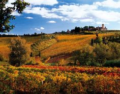 Crete Senesi ~ a region in Tuscany crowned with towers, castles and abbeys which make it enchanting and surreal. The area surroundings include Siena Asciano, Montisi, Rapolano Terme, Serre di Rapolano, and San Giovanni d'Asso.