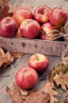 Some fruits of fall harvest, apples are very good for health.