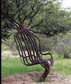 Odd lookin tree~It is interesting isn't it....