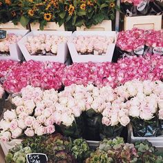 Can I have a corner like this in our new home please? @alopez73 #Amsterdam #Wanderlust #flowers #pink