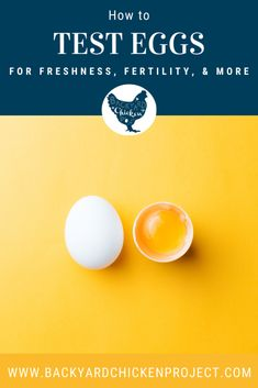 How to test eggs for Freshness, Fertility and Meat/Blood Spots Egg Test For Freshness, Candling Chicken Eggs, Storing Eggs, Raising Backyard Chickens, Egg Incubator, Brown Eggs, Fresh Chicken, Cooking Ingredients, Fertility