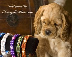 Custom Beaded Collars for your Loved pet! I Order from this lady all the time, amazing quality, unique and affordable!