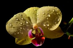All sizes | orchid | Flickr - Photo Sharing!