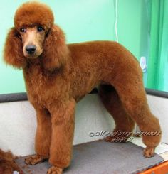 Grooming Your Furry Friend: Does