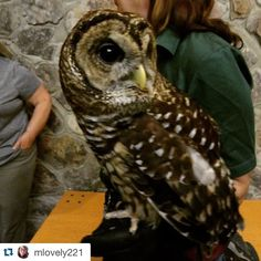 Coosa on the loosa!!! ----- #Repost @mlovely221 with @repostapp.  Coosa the barred owl!! #alabama #animals #owls #barredowls #thatface #wings #wingedfriends #wildbirds #wildlife #alabamawildlife