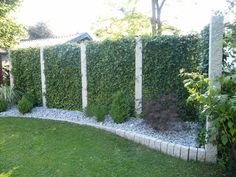 Efeu-Element & 180 x 120 cm & JUBILÄUMSPREIS Mobile prefabricated hedge® & privacy screen, fence The post Ivy element Outdoor Landscaping, Landscaping Plants, Outdoor Gardens, Patio Plants, Garden Plants, Hydrangea Care, Different Plants, Vertical Gardens, Garden Gates