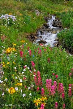 #AmericaBound and @Earthbound Farm Colorado Mountain Wildflowers