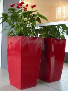 Large red Kubik planters planted with flowering red Anthuriums