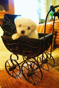 This little dog is so cute, he almost doesn't look real!! Photo credit - Lucy Jane Antiques