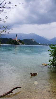Bled, Slowenia Cali, River, Outdoor, Beautiful, Outdoors, Outdoor Games, The Great Outdoors, Rivers