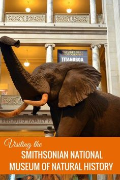 Guide and tips for visiting The Smithsonian National Museum of Natural History in Washington, DC with kids | Museums with kids