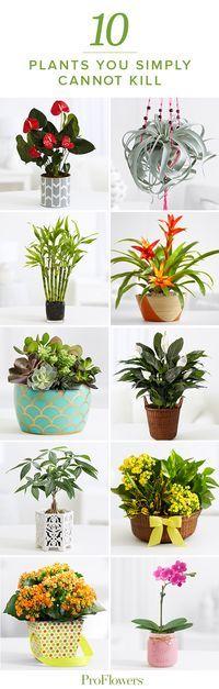 Meu tipo de planta! ;)