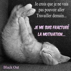 Je me suis fracturé la motivation. Quotes Español, Best Quotes, Funny Quotes, Funny Cats, Funny Animals, Quote Citation, French Quotes, Positive Attitude, Motivation Inspiration