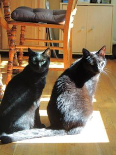 """From Diane Jackson... """"This is Zumpy (13 year old girl) and Charlie (7 year old boy) enjoying the sun."""" For the month of October, Cat Faeries is celebrating black cats. We will post pictures of our customer's cuties and donate 1% of our October sales to several black cat rescue groups. You can find out more at www.catfaeries.com/blog/celebrating-black-cats-in-october/"""