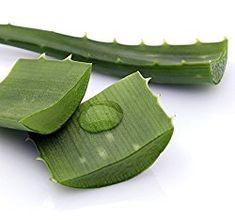 5 Minutes DIY Vitamin C and Aloe Vera Serum     The Simple Life