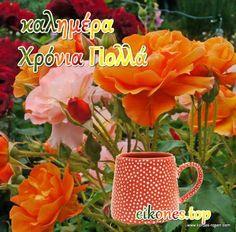 Happy Name Day, Happy Names, Happy Birthday, Plants, Top, Happy Brithday, Urari La Multi Ani, Happy Birthday Funny, Plant