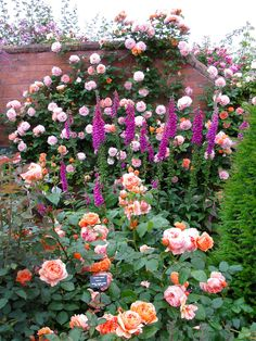 Climbing roses, foxgloves and shrub roses. Next Garden, Dream Garden, Beautiful Roses, Beautiful Gardens, Shrub Roses, Romantic Flowers, Rare Flowers, English Country Gardens, Garden Shrubs