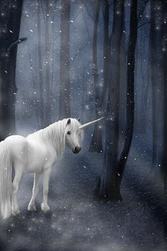 Beautiful Unicorn In Snowy Forest Photograph by Ethiriel  Photography