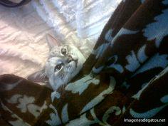 Qué a gusto está este gato, tapado con su manta...