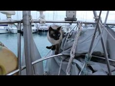Bailey Boat Cat - Adventures Of A Feline Afloat - YouTube