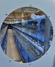 Plate-forme Industrielle Courrier (PIC) de Wissous : vue générale du secteur traitement automatique de l'enveloppe (TAE) © photo André Tudela, La Poste, DR.