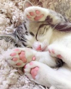 Top 25 Cute Kittens and Funny Cats Grey Tabby Kittens, Cute Cats And Kittens, Baby Cats, I Love Cats, Kittens Cutest, Small Kittens, Kitty Cats, Cute Baby Animals, Funny Animals