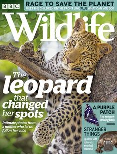 Buy Digital and Print Copies of BBC Wildlife Magazine - May Available on Desktop PC or Mac and iOS or Android mobile devices. Male Magazine, Magazine Art, Magazine Design, Magazine Covers, Animal Magazines, Magazines For Kids, Men's Magazines, Rare Animals