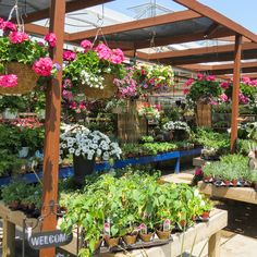 Summer season at The Glasshouse! #GardenCentre #Glasshouse #Chatham - Visit http://www.glasshousenursery.ca