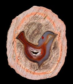 """Amazing unique bird-like agate. This rock is known as a """"Thunder egg"""" and the outer shell is comprised of rhyolite. From Chihuahua, Mexico Credit: Captain Tenneal Cool Rocks, Beautiful Rocks, Minerals And Gemstones, Rocks And Minerals, Rock Collection, Rocks And Gems, Stones And Crystals, Gem Stones, Photos"""