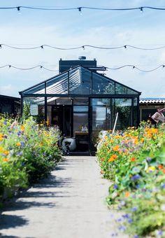 Amazing rooftop garden in Copenhagen. Full of flowers, herbs and vegetables.