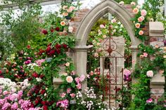It's a year of the roses and here is Peter Beales' rose garden.  This is what dreams are made off.