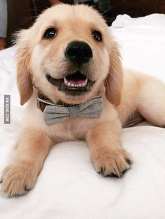 Looking good with a bow tie - 9GAG