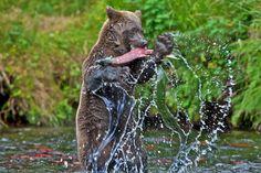 Bucks Wildlife Photography