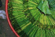 Découverte majeure: Une plante réduit l'anxiété de façon significative!